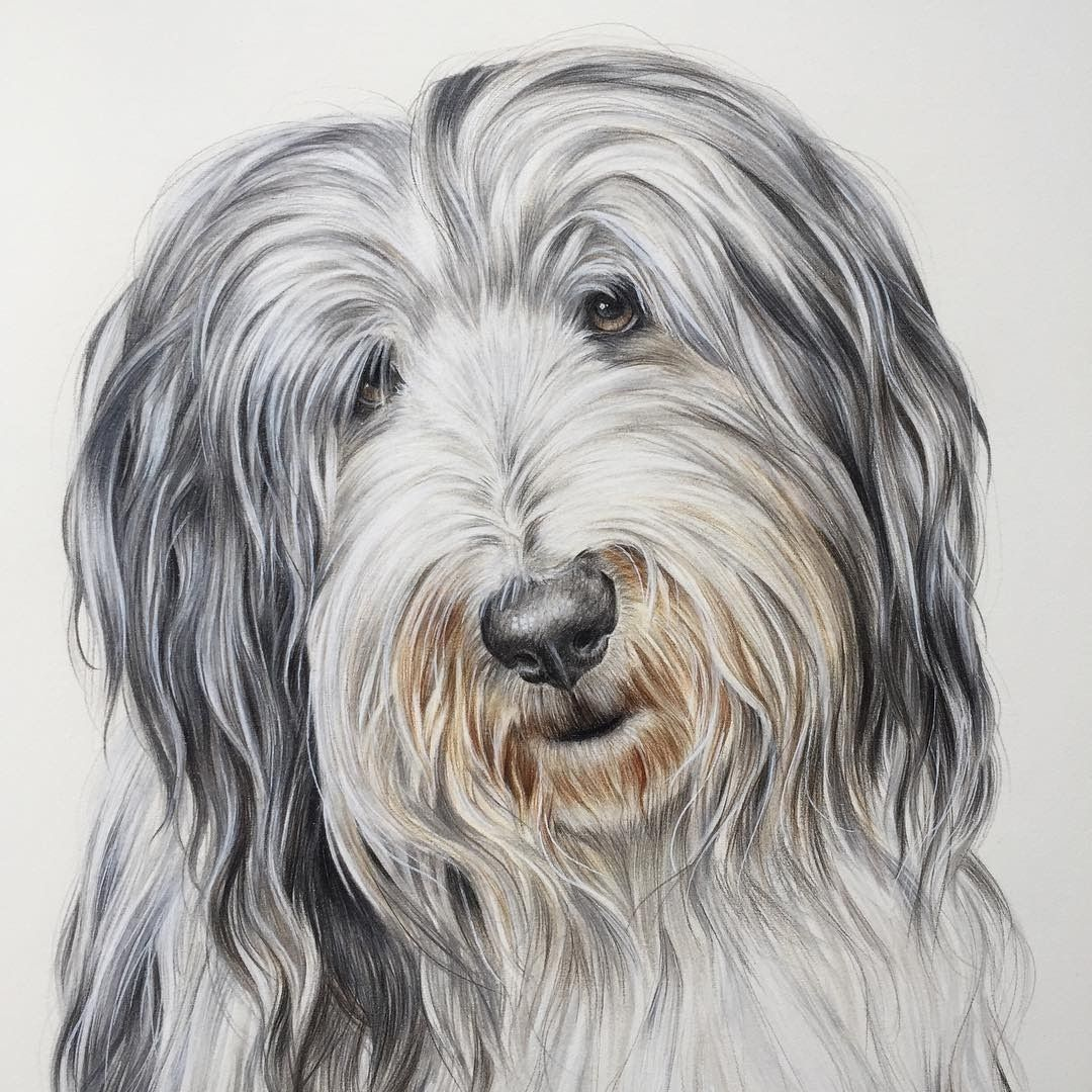 Pet Portraits Cats and Dogs Drawings в 2019 г.