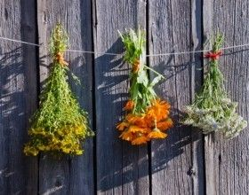 14 Plants For A Good Digestion Plants Digestion Homesteading