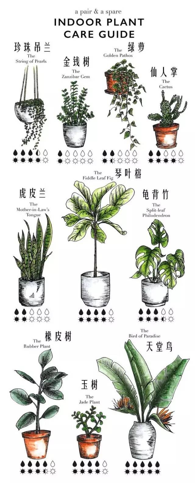 Indoor Plant Care Guide in 2019 | Plants, Indoor plants ... on weed chart, house paint chart, house color chart, vegetables chart, fish chart, house cat chart, poisonous plants chart, house garden chart, fern chart, house building chart, flower chart, bird chart, house animals chart, apple chart, herb chart,