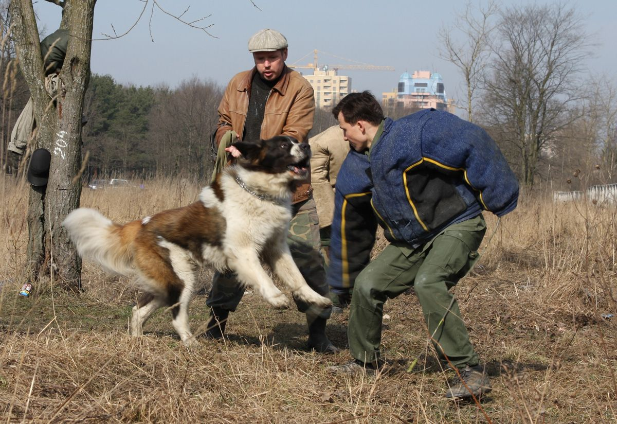 Let the experts teach you how you can train your dog, and