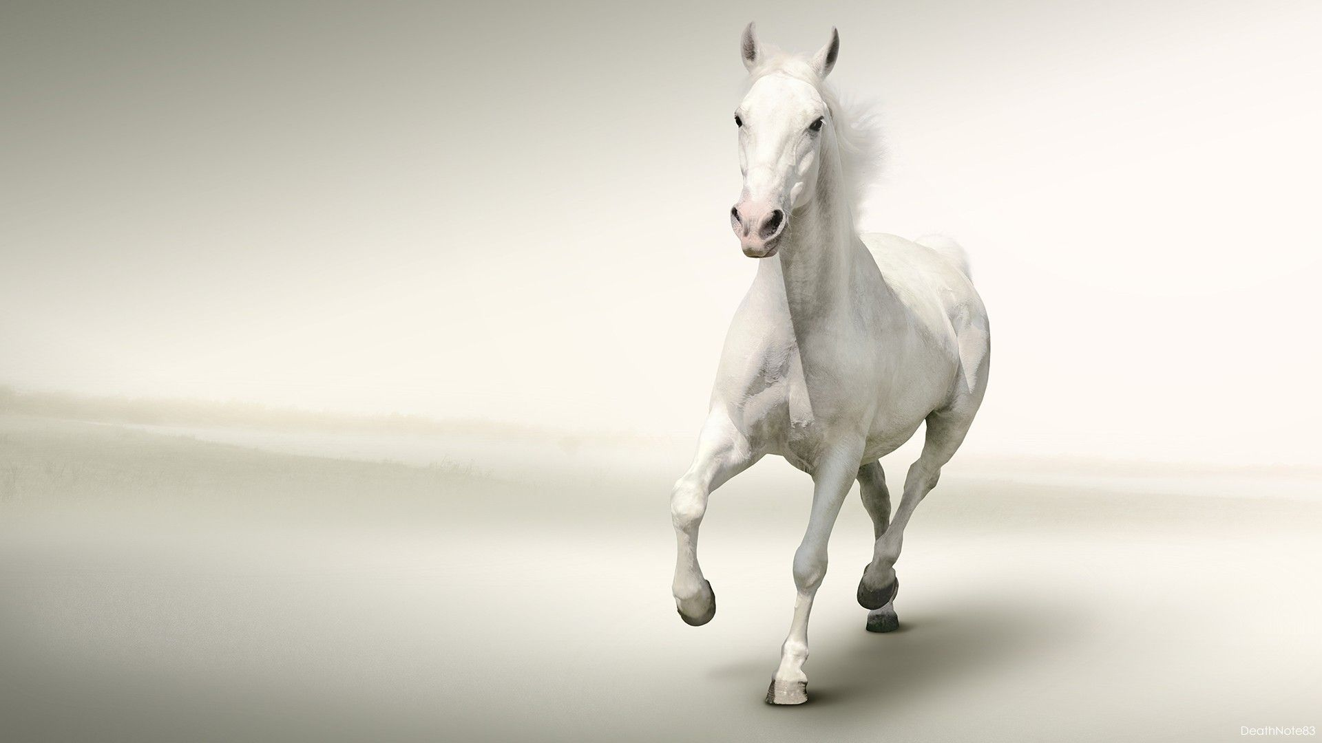 White Horse Running White Background Hd Wallpaper Horses Horse Wallpaper White Background Hd