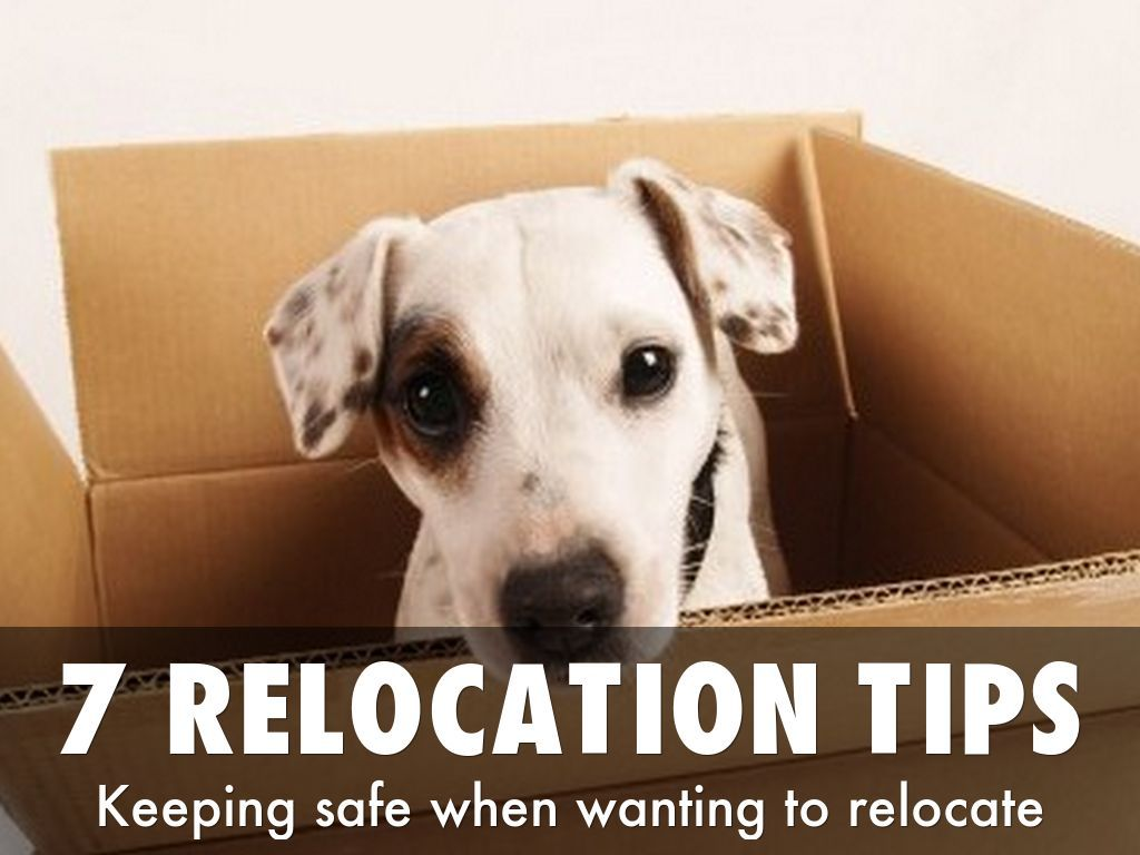 7 Tips For A Successful Relocation Project A Haiku Deck By Connor Macivor If You Are Wanting To Relocate Within The Moving With A Dog Pets Dogs