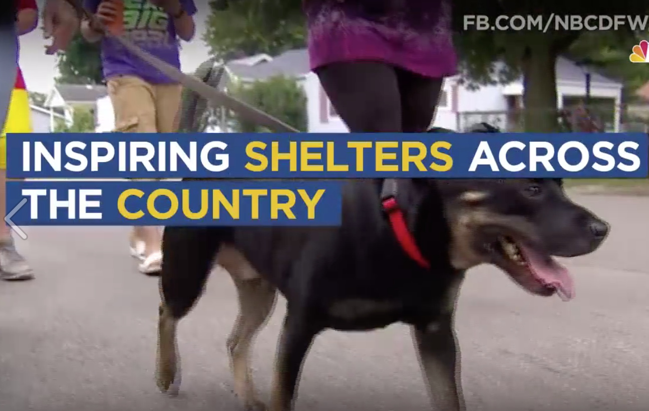 Pairing Pokemon Go players with shelter dogs who need walks = everybody wins.
