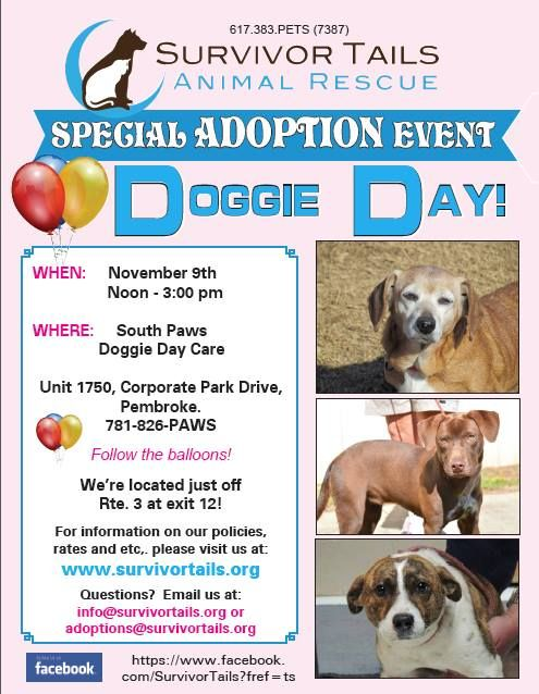 Pin On Animal Adoption Events Fundraisers