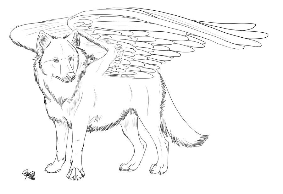 pictures of winged animals wolves and cats | Winged Wolf ...