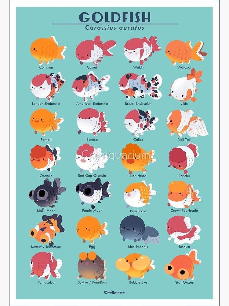 'Goldfish Breed Poster' Poster by Comiquarium