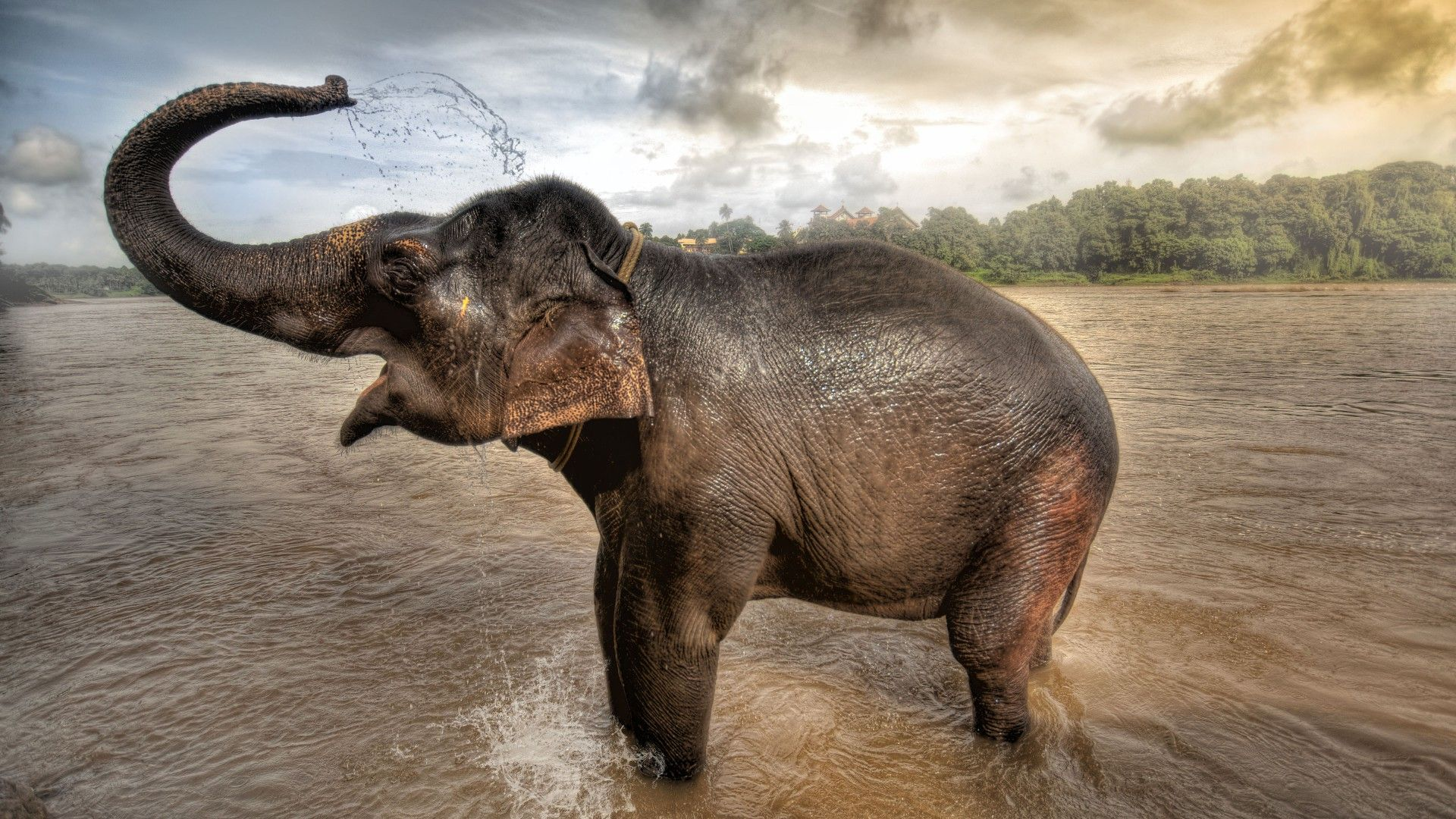 Elephant Wallpaper HD 1080pElephant Wallpaper HD 1080p