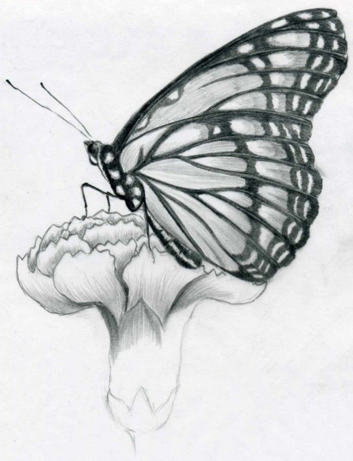 Flowers and butterflies drawingshow to draw a butterfly drawing sitting on flower in pencil xv982hss