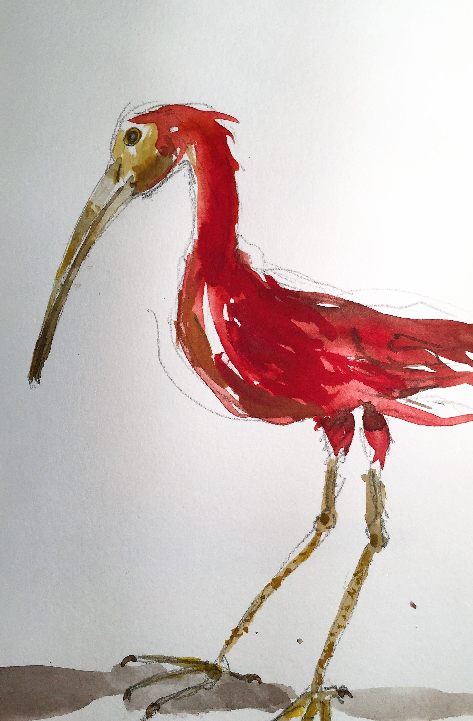 Aquarelle D Oiseaux Museum De Nantes Aquarelle Dessin Oiseaux