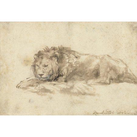 Reclining Lion Canvas Art - (36 x 24)
