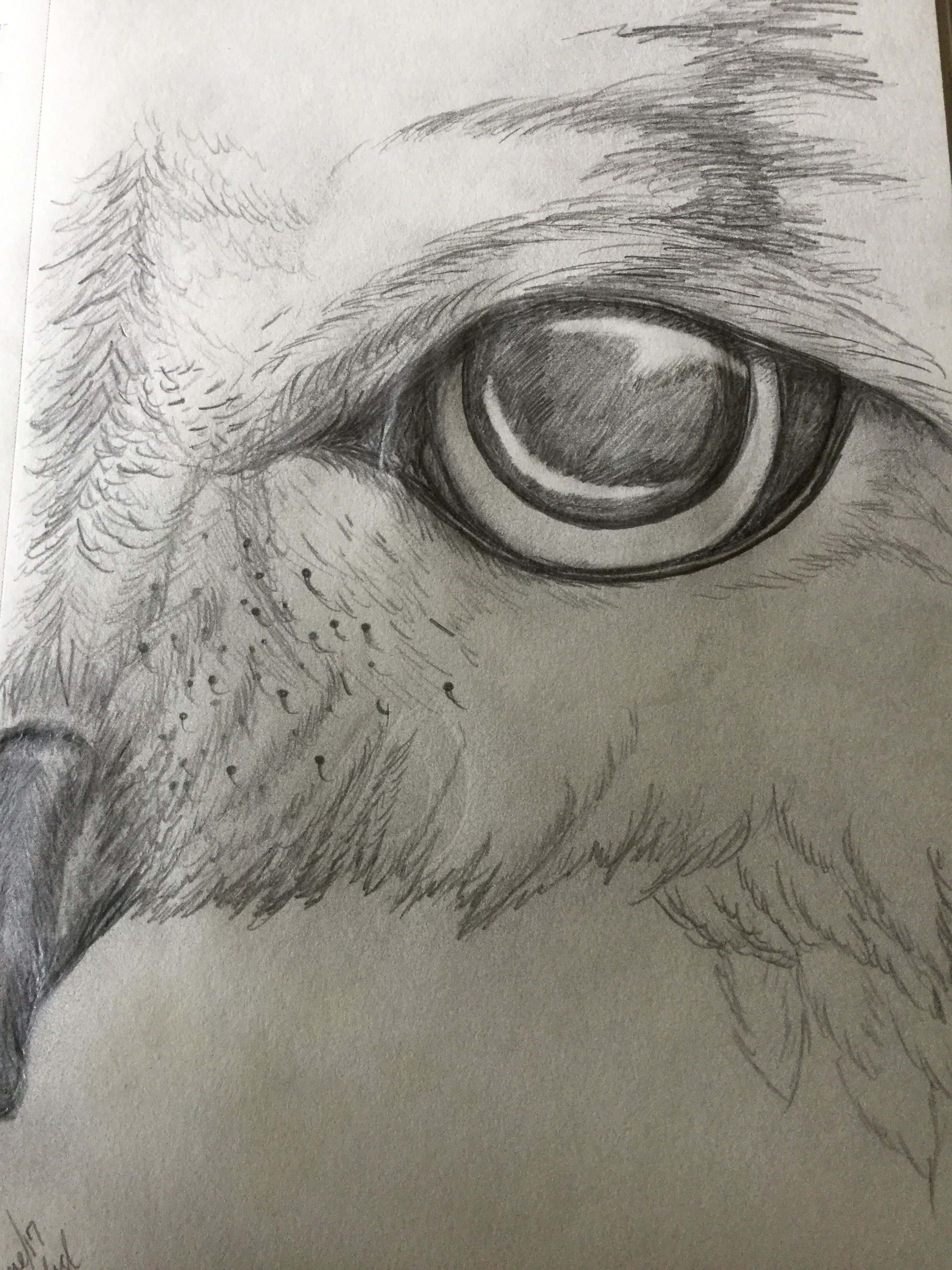 Pencil drawing of owl eye michelle in 2019 pencil drawings owl
