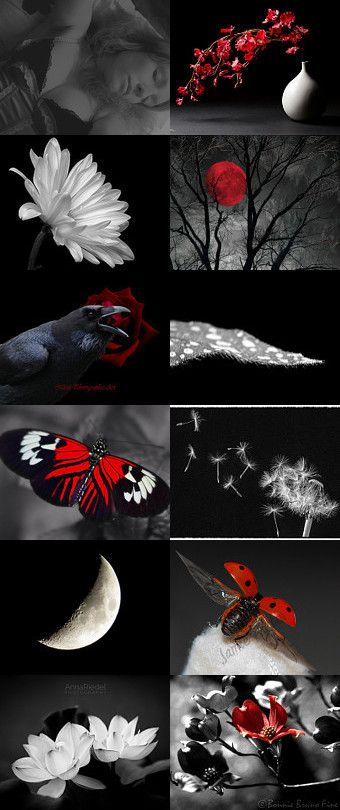 """Dreams in contrast by Janine on Etsy--featuring """"Butterflies in Black White & Red"""" by #OberleighImages (4th row left)"""