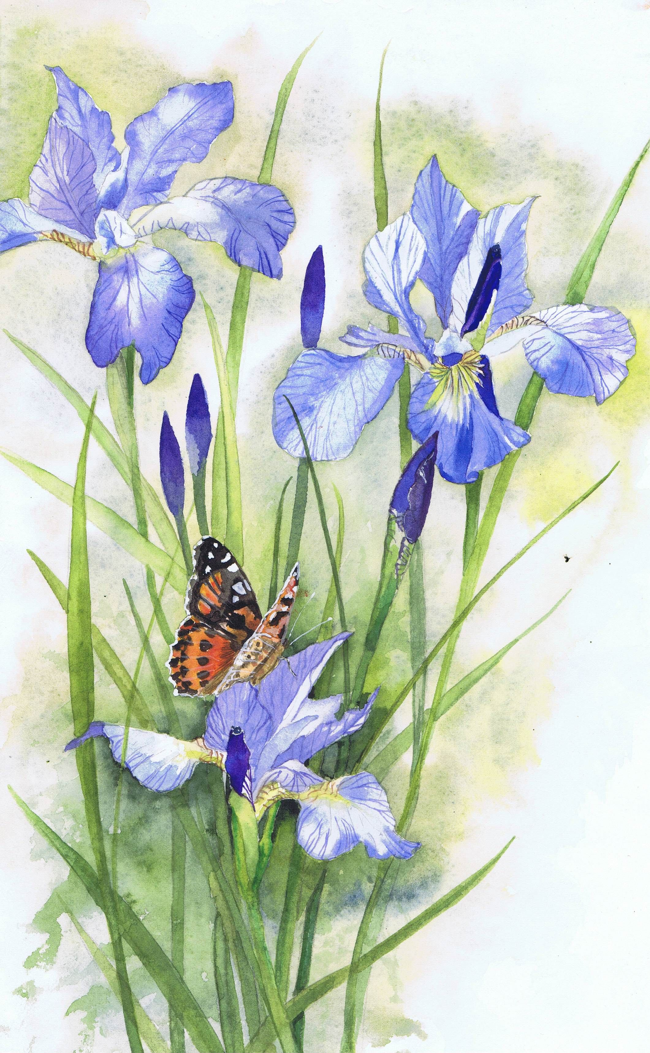Painted Lady butterfly on Irises - watercolour painting by ...