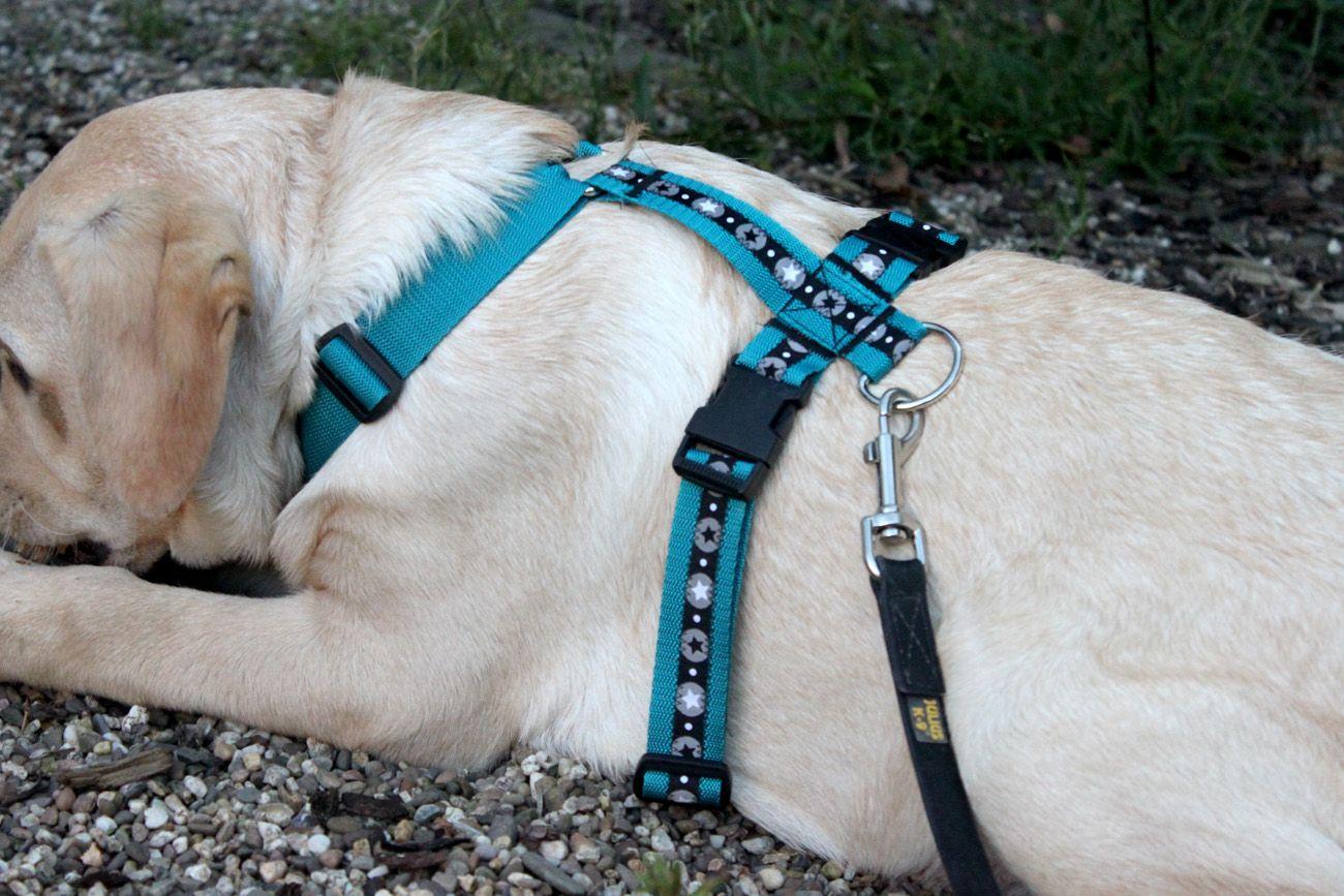 Nähen für den Hund: ein Hundegeschirr | Hundegeschirr, Selber nähen ...
