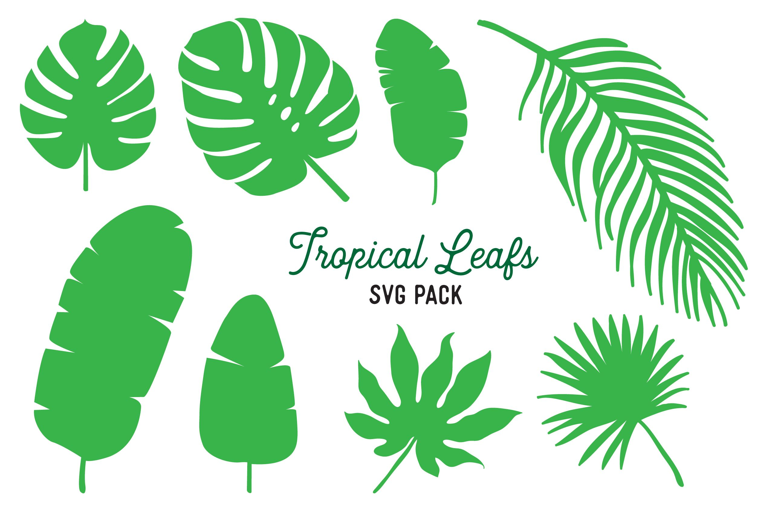 Tropical Leaf SVG Vector Design Bundle (Graphic) by The