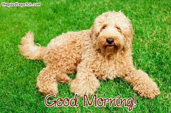 Good Morning Healthiest Dog Breeds Dog Breeds Designer Dogs Breeds