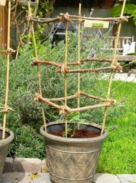 Risultati immagini per legatura pomodori in vaso | Orto in Balcone ...