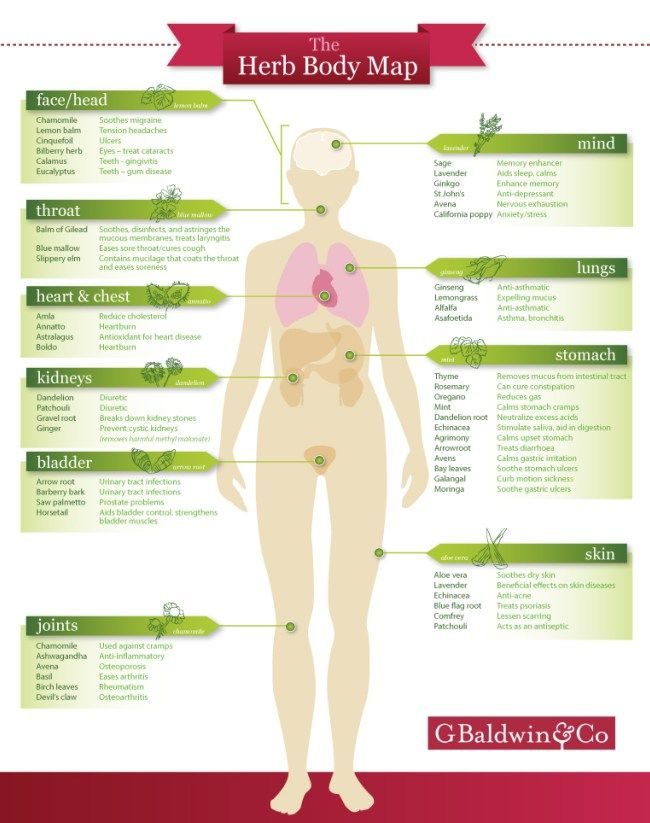 An Herb Body Map - Nature Moms
