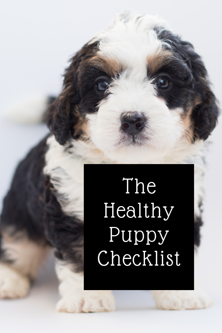 Healthy Puppy Checklist Signs Of Illness Puppies Dog Training Dog Training Tips