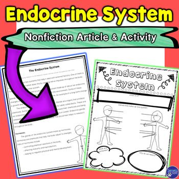 Endocrine system nonfiction article and doodle sketch note activity also atoms elements unit google classroom periodic table rh pinterest
