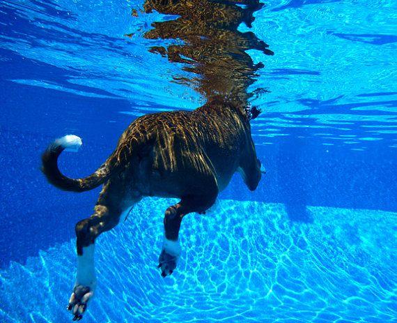 Swimming Pool Dog Paddle 8x10 Photograph Fine Art