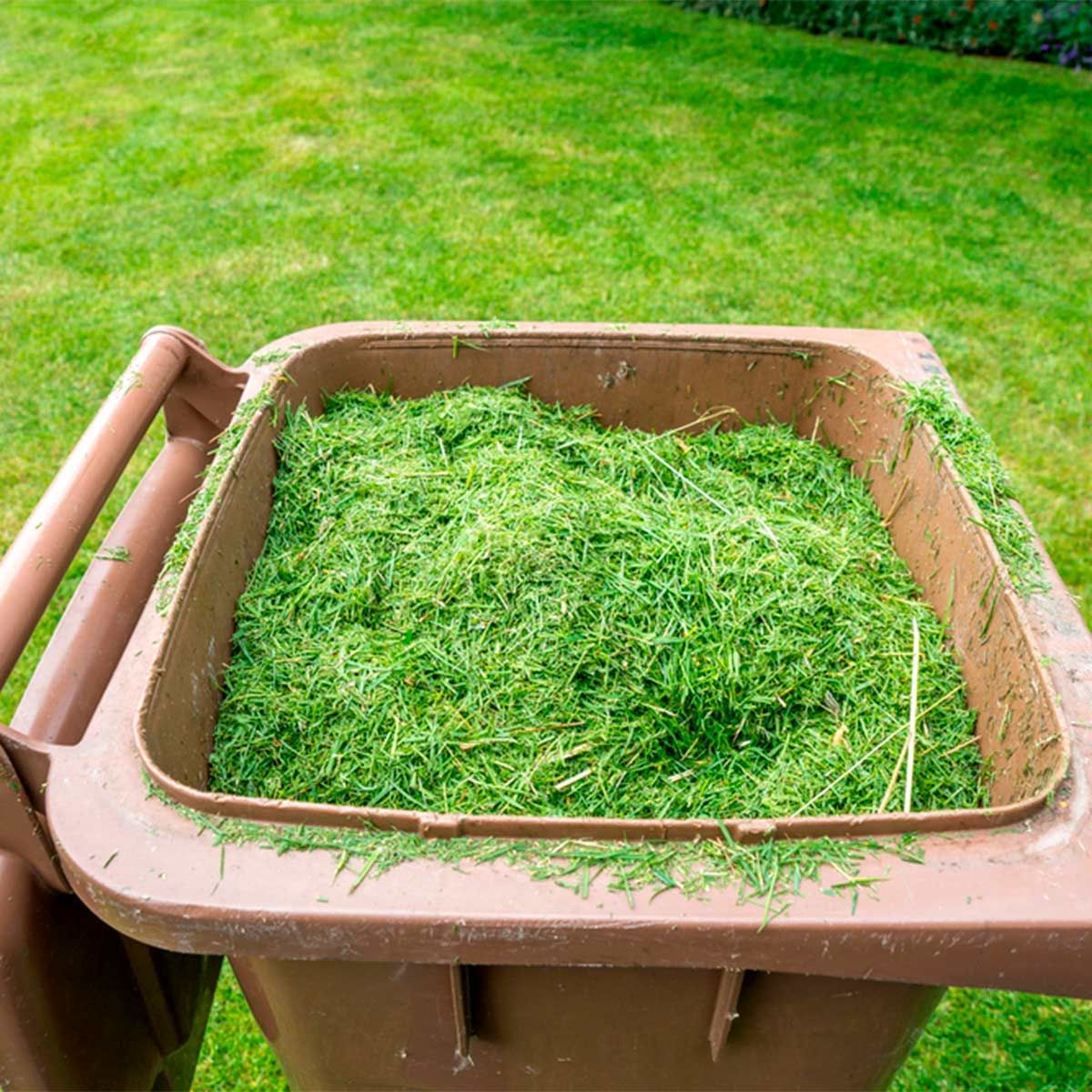 Mowing Wet Grass Here Are The Top 20 Tips To Know Growing