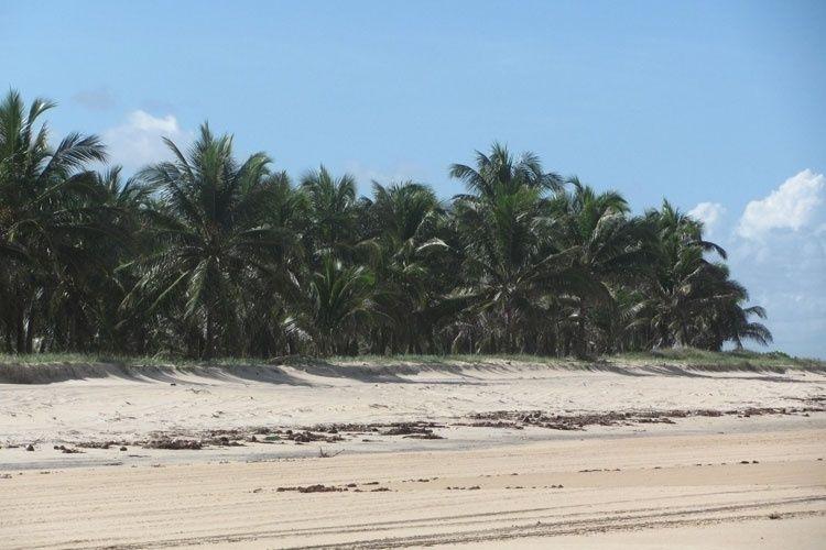 Praia do Gunga, em Alagoas, encanta com suas belezas