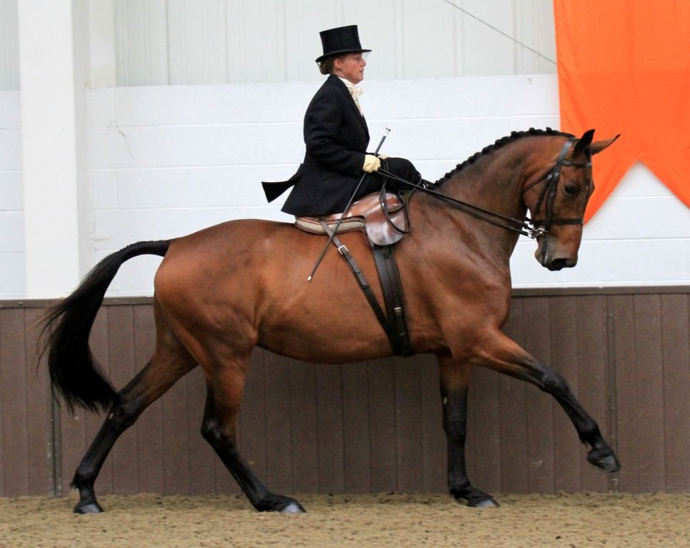 """Sidesaddle: """"Riding Aside"""" Is On the Rise   EquiSearch"""