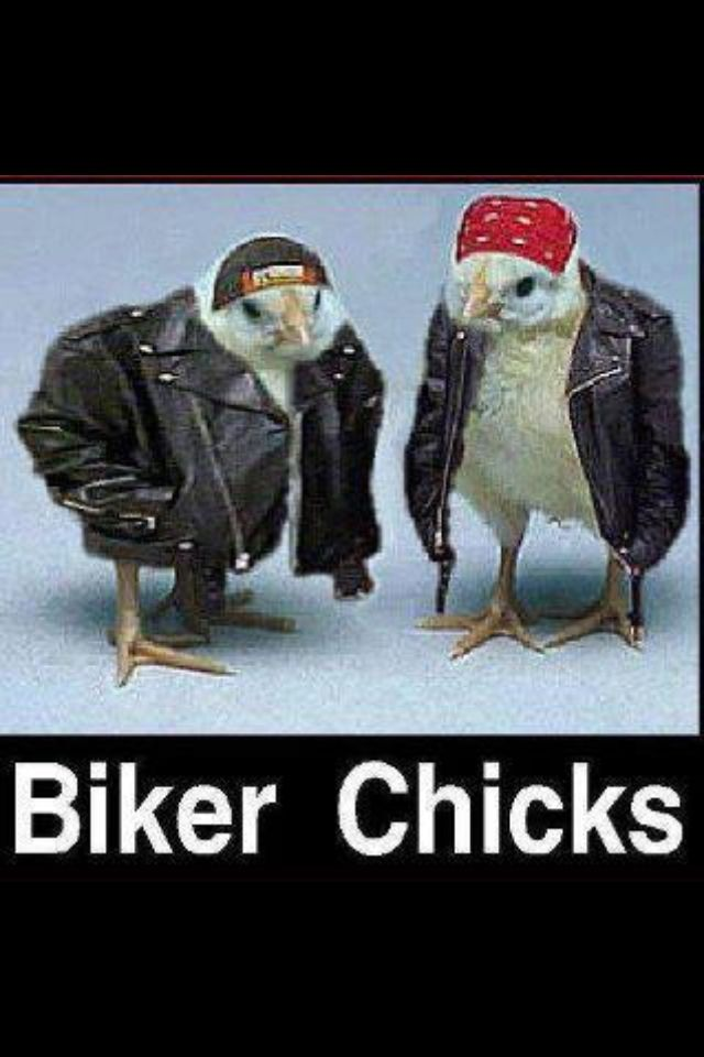 More biker chicks in leather!