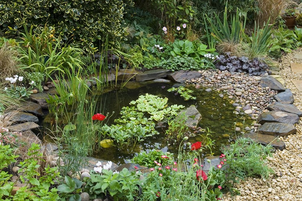 Attract wildlife to your garden pond garden ponds for Pond with plants