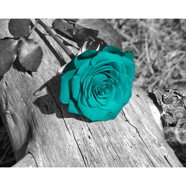Black White Teal Wall Art Photography/Rose Flower/Floral Bedroom ...