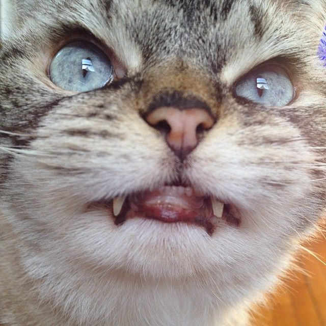 Ever heard about Vampire Bats? Its time to See a Vampire Cat! - Viralomia