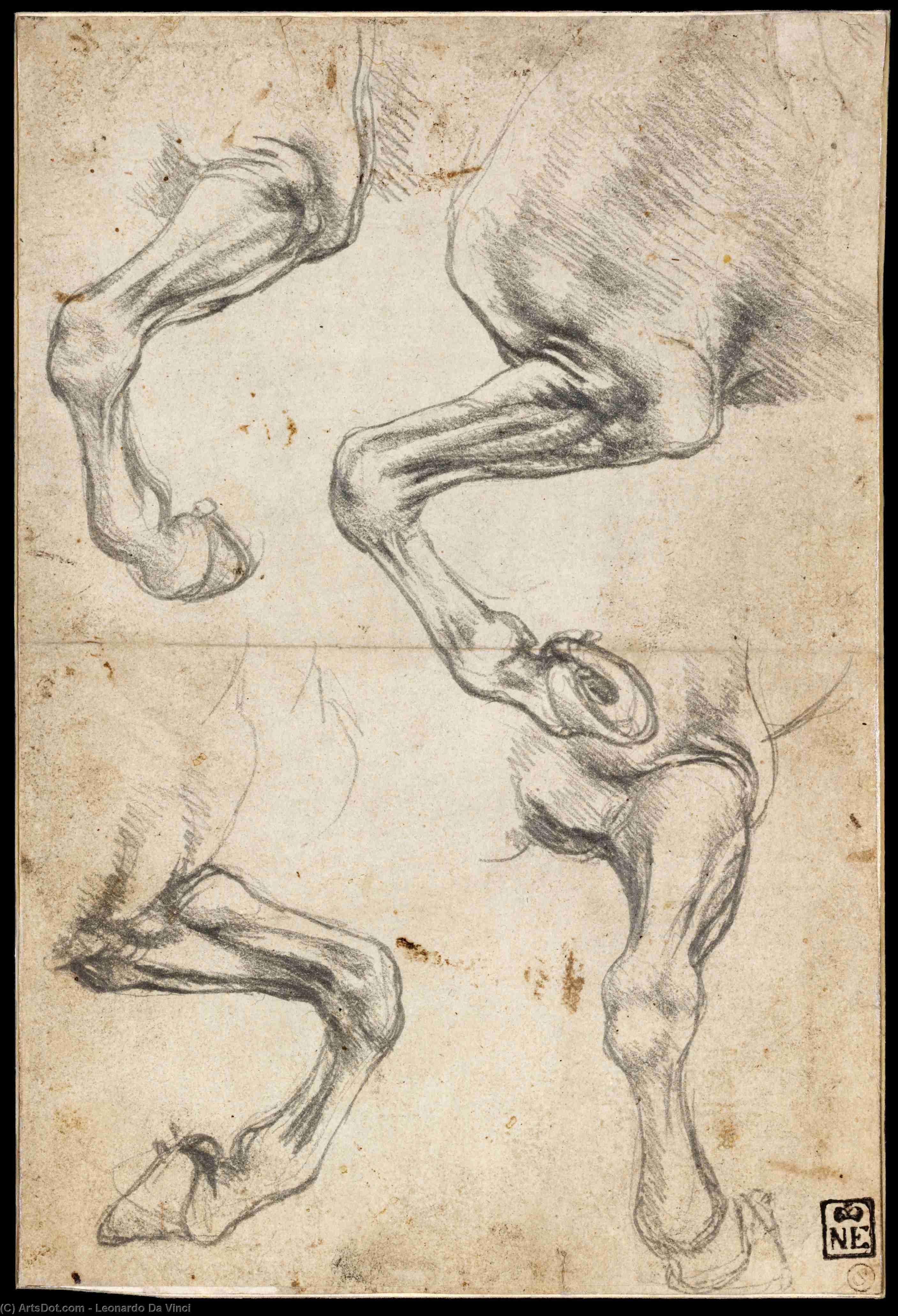Leonardo Da Vinci-studie blatt mit pferde und drachen | Leonardo Da ...