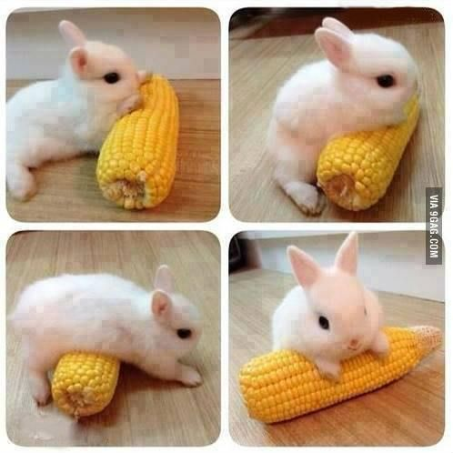 I Has A Corn Cute Funny Animals Baby Animals Funny