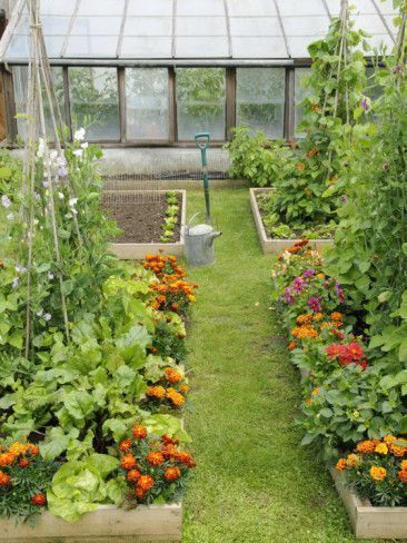 Summer Garden with Mixed Vegetables and Flowers Growing in Raised Beds with Maribeds