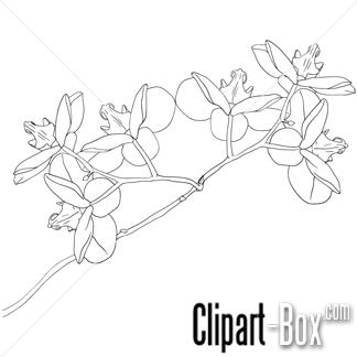 Imagem Relacionada Orchid Drawing Flower Outline Flower Drawing