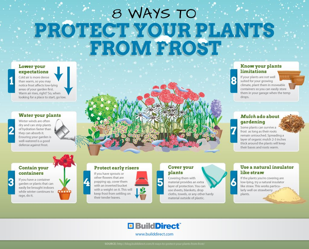 How to protect your plants from frost.