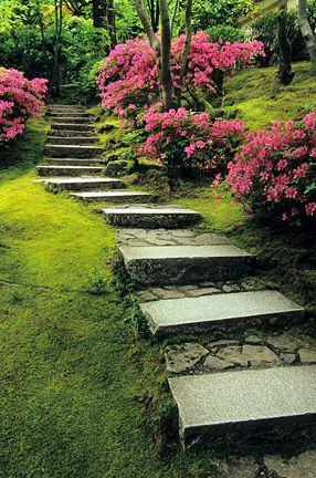 Delightful Natural Garden Azaleas. Photo By David M Cobb Courtesy Of The Portland  Japanese Garden