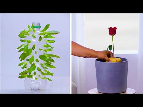 We Re Rooting For These 12 Clever Plant Hacks Diy Gardening And Plant Tips By Blossom Youtube Jardinage Conseils De Jardinage Jardins