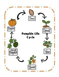 Preschool Printables: Pumpkin Life Cycle Printable
