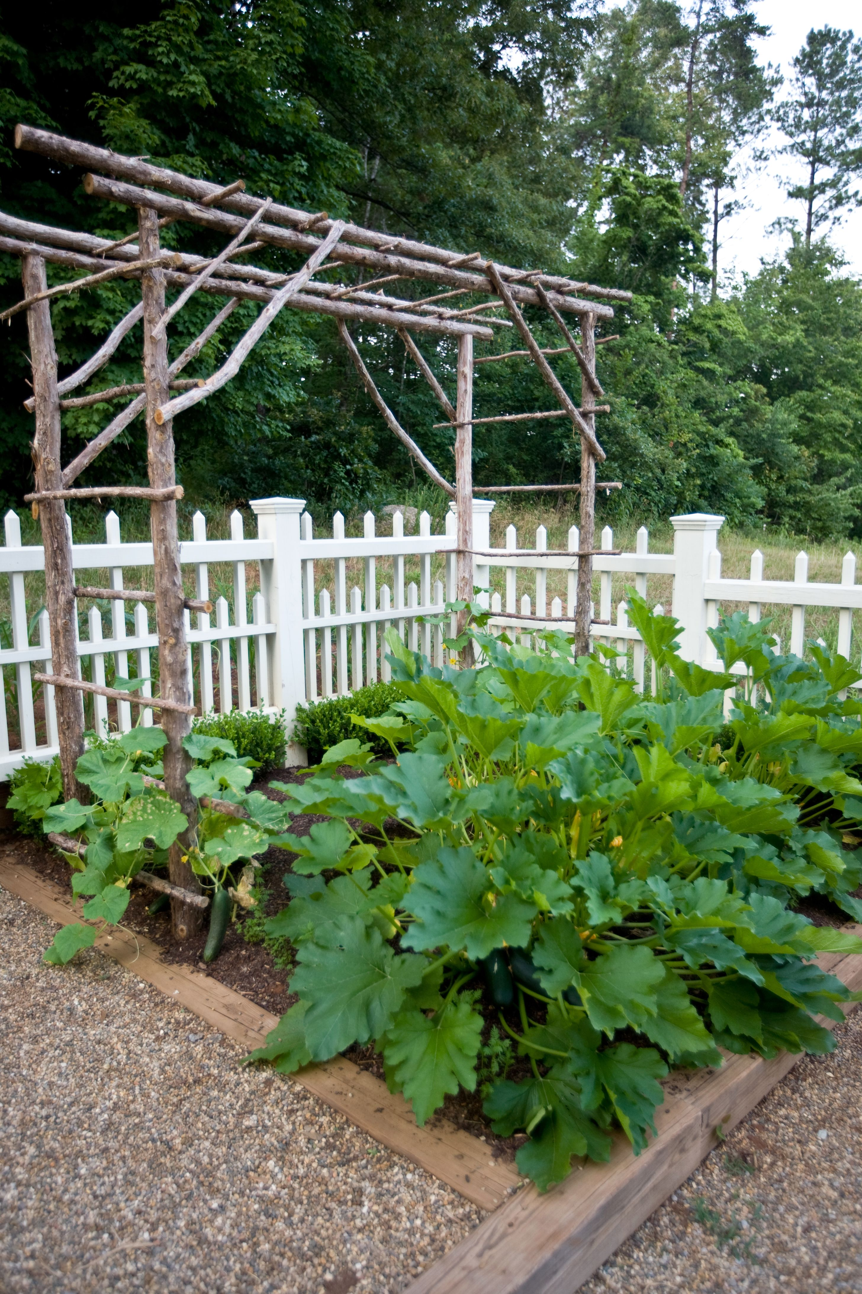 cedar trellis for climbing cucumber vines and decorative gourds