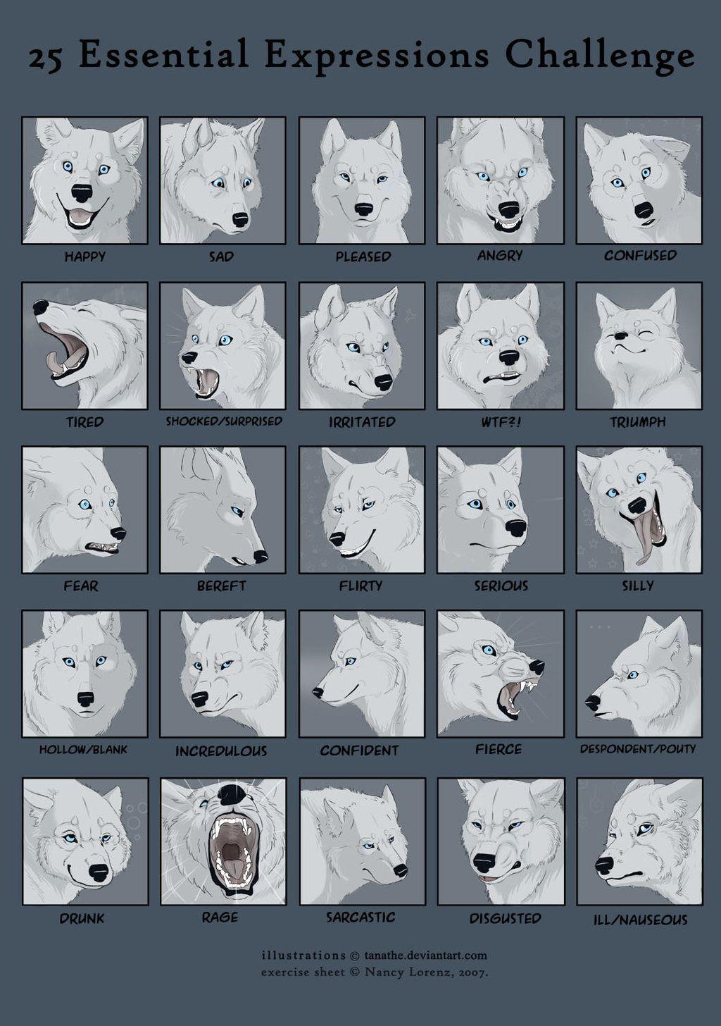 Kosmate Wolf mimiko - fotografije in druge razvedrilo-7727