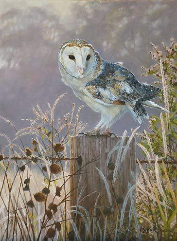 Barn Owl Bird Art by Bird Artist Lyn Ellison