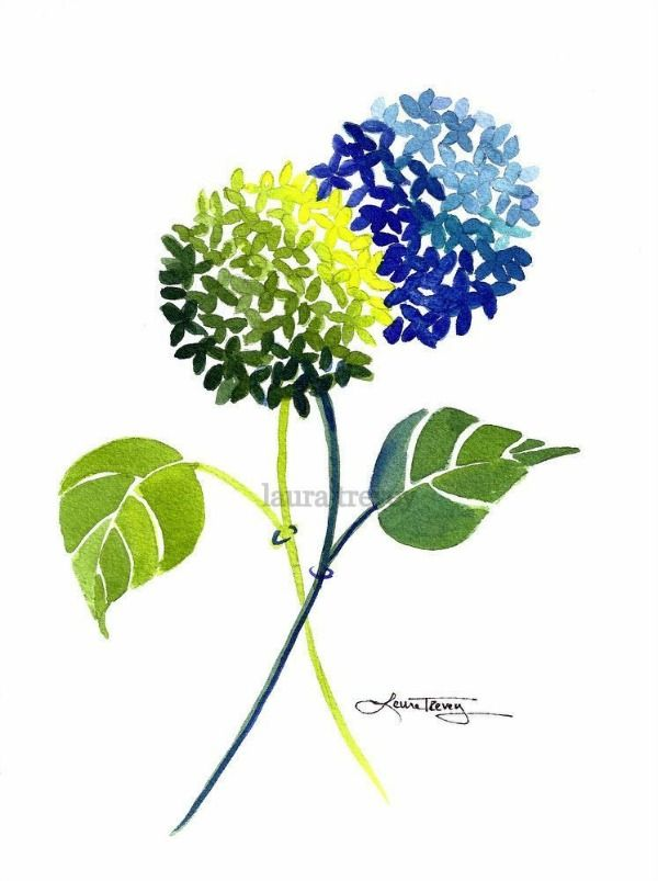 blue and green hydrangea watercolor - wall art print for your home or office