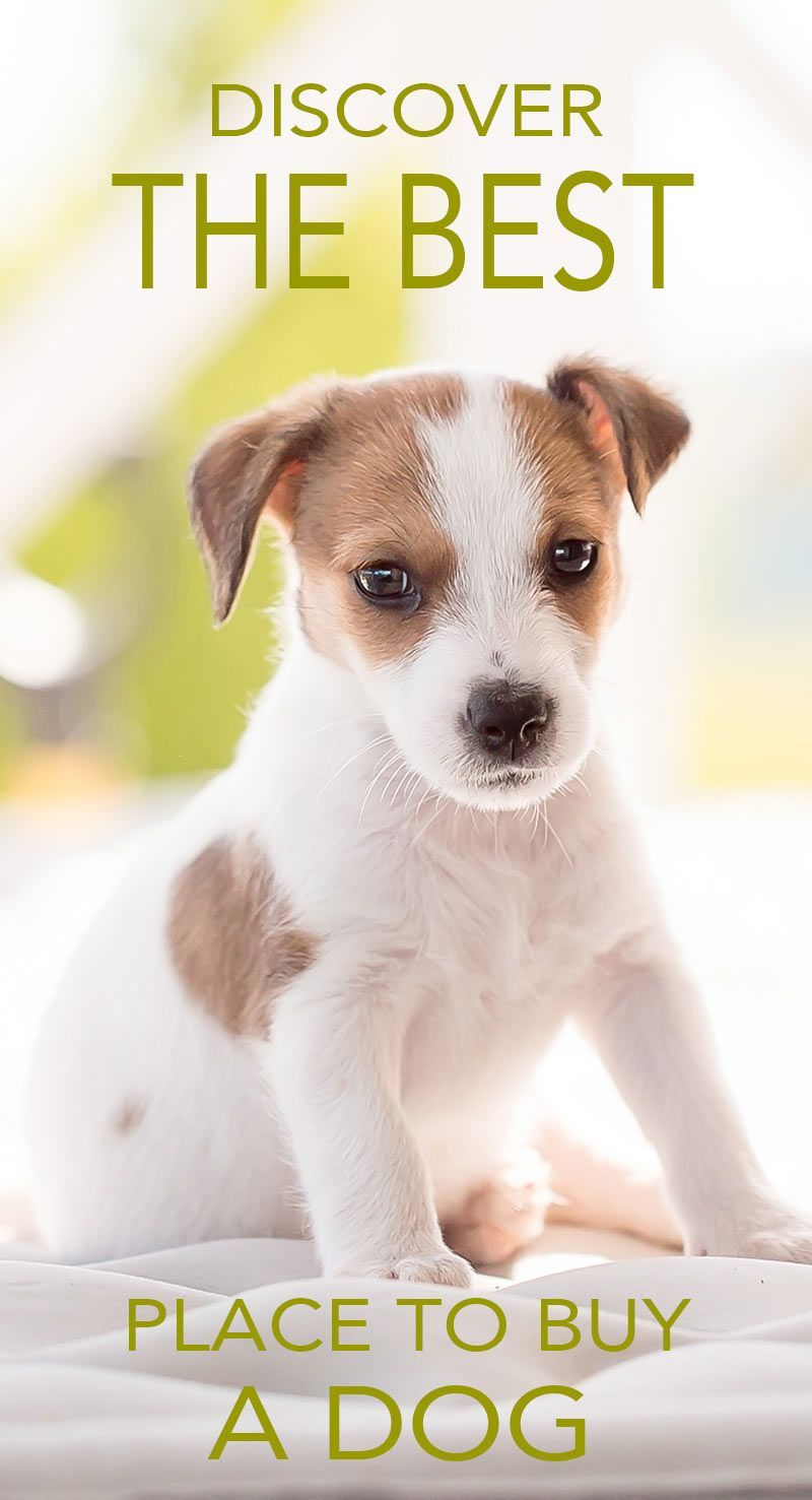 Where To Buy A Dog Or Puppy The Best Places To Look For A Dog Bestdogbreeds Buy A Dog Fun Facts About Dogs Where To Buy Dogs