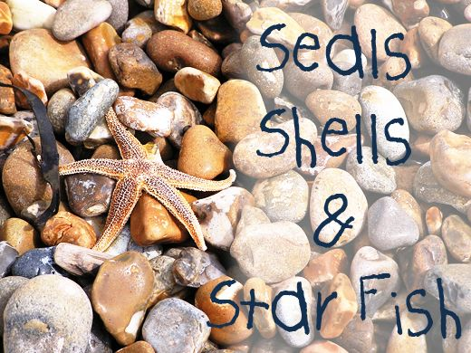 The beach doesn't have a to be a summer activity visit out of beach season and discover a treasure trove of finds - great way to create a sense of wonder and awe for the natural world