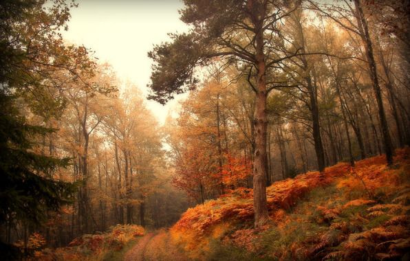 Wallpaper Nature Forest Autumn Road Wallpapers