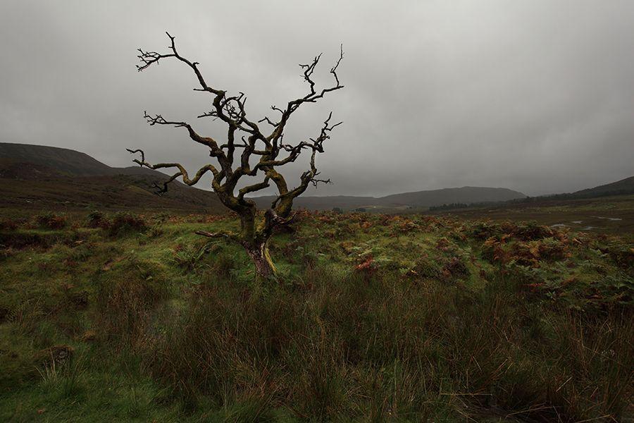Highlands of Scotland    UK
