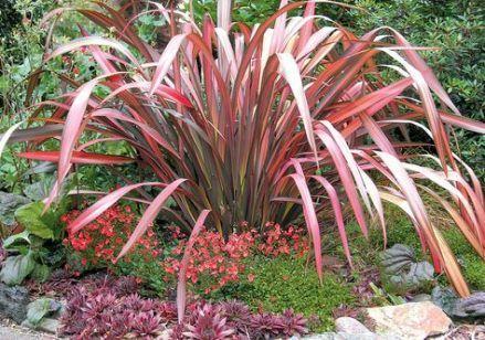 19 Best Ideas garden ideas new zealand front yards ...