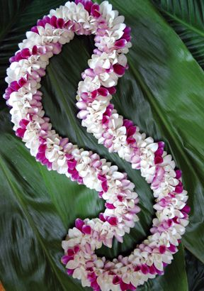 Spiral Dendro Pam3 Lei Dendrobium Orchids Orchids Flower Garland Wedding